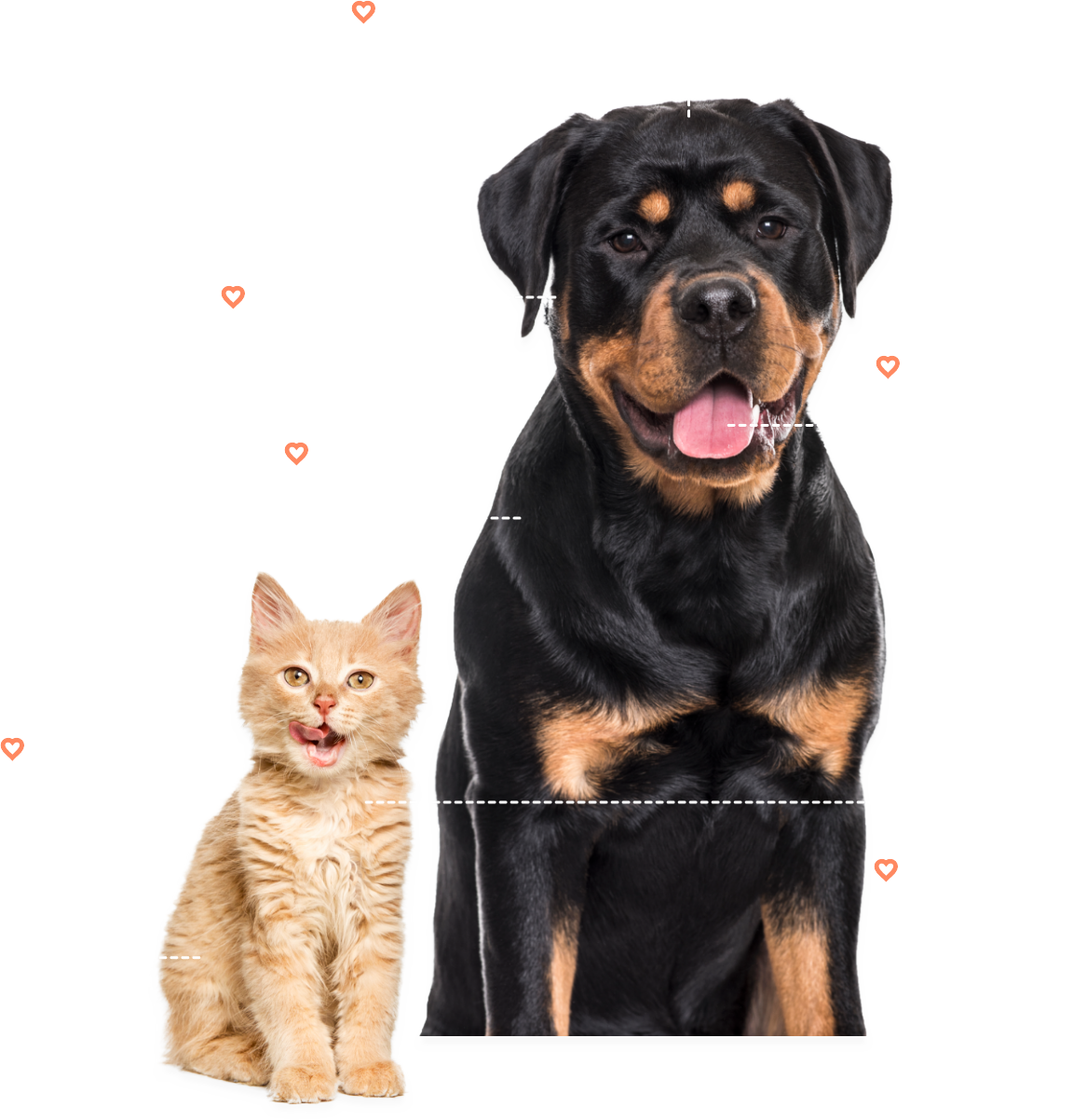 dog-and-cat-info